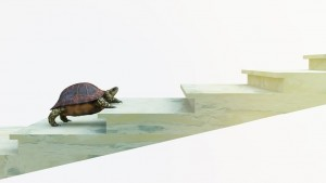 turtle climbing up staircase