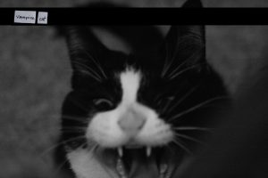 Photo of black and white cat with fangs