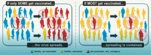 illustration showing herd immunity from the CDC: if only some get vaccinated, the virus spreads. if most get vaccinated, spreading is contained.
