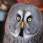 owl looking shocked and angry